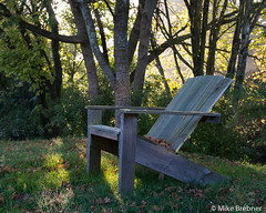 Autumn rest (Mike Brebner) Tags: autumn fall light woods trees leaves capecod chair wooden morning mist fog rays early plants garden hamilton nz newzealand 2018 may waikato