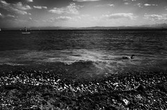 Surfer and duck (stefankamert) Tags: stefankamert surfer duck water waves lake lakeconstance bodensee noir blackandwhite blackwhite clouds grain ricoh gr grii stones sky landscape