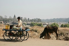 Dailylife in Orchha (Iam Marjon Bleeker) Tags: india orchha betwariver holycow peoplefromindia dailylife dailylifeinorchha dag11md0c9081g