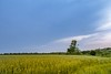 Before the storm (Daniel Boca) Tags: clouds cloud cloudscape landscape tree trees field growth colours blue bluesky outdoor outside outdoors nature naturephotography naturepics naturephotograph weather storm meteorology