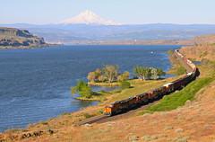 Avery, Washington (UW1983) Tags: trains railroads bnsf fallbridgesub freighttrains columbiariver avery washington mounthood