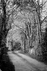 Camino con árboles (ccc.39) Tags: asturias latores oviedo camino árboles blancoynegro bn path blackandwithe bw monochrome trees