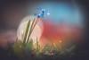 RGB (--StadtKind--) Tags: manuallens primelens sonyilce7rm3 sonyalpha teamsony stadtkind macrophotography macro naturephotography nature depthoffield doflicious dof bokehlicious bokehaddicts bokehmasters bokeh perfectpetals petal fleur flower flores