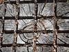 Stump (maytag97) Tags: maytag97 nikon d750 stump grain pattern geometric square grid organic ring growth pine needle
