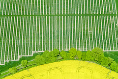 Seed Field (Aerial Photography) Tags: by fs obb 18052004 ackerbau bach bavaria bayern blüte bogen deutschland farbe feld fotoklausleidorfwwwleidorfde fotoklausleidorfwwwleidorfaerialcom gelb germany getreidefeld grafik grün hecke landscapeandnature landschaft landschaftnatur landwirtschaft luftaufnahme luftbild p1 raps region reihen s2p38744 saatzucht aerial agriculture brook color colour colza cornfield creek curve field graphicart graphics green hedge landscape landscapenature nature outdoor rape rows stream verde yellow moosburglkrfreising bayernbavaria deutschlandgermany deu