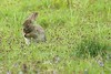 Praying Bunny (Mrs Airwolfhound) Tags: sandy animals cute furry canon 70d nature rspb lodge bunny