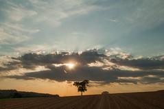 Sunset behind the clouds (Niclas Matt) Tags: landscape field sunset sunburst tree nikon nikond90 natgeo clouds sky skyporn fineart art artwork artphotography fineartphotography forest