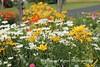 Benton Daylilly Farm (61) (Framemaker 2014) Tags: benton daylily farm garden flowers columbia county pennsylvania endless mountains united states america