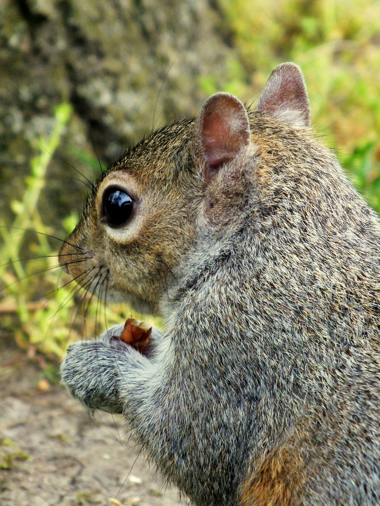 Best Food For Baby Squirrels
