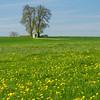 Springtime in Bavaria (Janos Kertesz) Tags: green meadow grass nature landscape blue spring field flower natural yellow rural sky römertshofen bayern bavaria kapelle löwenzahn