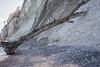 Stretching (BlossomField) Tags: cliff coastline trunk water sassnitz mecklenburgvorpommern deutschland deu