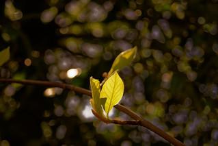 Une petite touche de lumière - A little touch of light