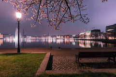 binnenalster during spring (thethomsn) Tags: binnenalster spring blooming tree night lamp park water city hamburg view longexposure thethomsn