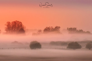 The foggy dunes of Wissel during sunrise.