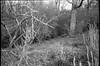 knarly branches, blossoms, grasses, trees, hillside, Biltmore Estae, Asheville, North Carolina, Nikon L35AF2 (One Touch), Kodak TMAX 400, Ilford Ilfosol 3 developer, Apri 27, 2018 (steve aimone) Tags: branches trees blossoms grasses hillside forest biltmore biltmoreestate asheville northcarolina nikonl35af2onetouch pointandshoot kodaktmax400 ilfordilfosol3developer landscape monochrome monochromatic blackandwhite 35mm 35mmfilm film