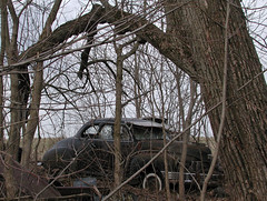 Lost dreams (LivGreen07) Tags: 1948 nash coupe black tree classic car vehicle