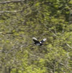 Maggie (Mal.Durbin Photography) Tags: forestfarm maldurbin wildlifephotography wildlife birds