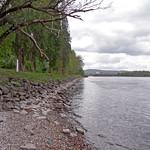 Rheinufer bei Urbar thumbnail