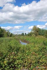 Волинське болото InterNetri Ukraine 15
