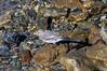20160816 - Olden - 125248 (andyshotts) Tags: sognogfjordane norway no greywagtail birds wagtail