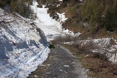 Ovronnaz (bulbocode909) Tags: valais suisse ovronnaz montagnes nature printemps paysages chemins neige arbres forêts vert