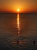 Sunbathing (louise peters) Tags: sunbath sunbathing zonnebad zonnebaden sunset sundown ocean sea oceaan zee indianocean indischeoceaan zanzibar water swimming swim zwemmen seascape zeegezicht zonsondergang people mensen zwemmers swimmers