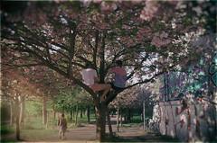 The Monkeys (elisachris) Tags: kirschblüte sakura frühling spring berlinermauer berlinermauerstreifen berlinwallstrip berlinborder natur nature berlin ostberlin eastberlin kalterkrieg coldwar ricohgr