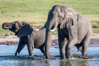 Elephants stop by a watering hole to get a drink in Hwange National Park. Hwange, Zimbabwe.