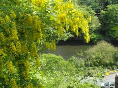 View of the River Severn (bryanilona) Tags: bridgnorth shropshire riversevern laburnum flowering blossom road traffic hightown lowtown citrit