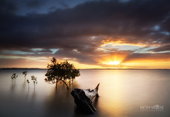 Serene Sunset (Beth Wode Photography) Tags: sunset dusk sundown sunrays le timber wood mangroves trees wellingtonpoint redlands beth wode bethwode seascape serenesunset calm peaceful