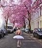 Kirschblüte in der Bonner Altstadt (mama knipst!) Tags: kirschblüte cherryblossom bonn altstadt deutschland germany allemagne