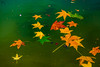 Nirvana (nimitrastogi) Tags: leaves fall autumn maple nature water nikon photography beauty beautiful