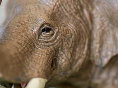 Happy birthday Arty.. (Liz McMahon) Tags: macromondays plastic 52in2018 15 gift elephant toys wildanimals macro nikond750 nikon105mmmicro