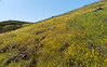 Blooming hillside (LeftCoastKenny) Tags: edgewoodpark hills flowers wildflowers trees brusg grass