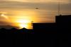 Bird in sunset (ks.standaert) Tags: sun sunset sunrise clouds city citycenter light yellow sky spring summer bird bruxelles brussels natural goldenhour yellowsky orangesky sundown