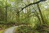 DSC_9058 (vwheng) Tags: d7200 newzealand forest nikon tokina 1120 1120mmf28 1120mm