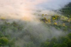 Misty Morning (Hector Prada) Tags: bosque niebla verano bruma arboles luz sol sombras forest fog mist summer light sun shadows nature naturaleza paísvasco basquecountry