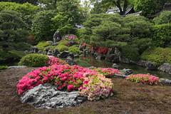 Kyoto Jonan-gu Muromachi-no-niwa Garden (maco-nonch★R) Tags: japanischer japanesephotographer japon japan japanese japón japanesegarden jonangu 城南宮 kioto kyoto azalea 中根金作 日本