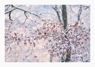 White Leaves - Konica Pro 160