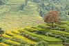 _Y2U7108.0913.Nấm Dẩn.Xín Mần.Hà Giang (hoanglongphoto) Tags: asia asian vietnam northvietnam northeastvietnam landscape scenery vietnamlandscape vietnamscenery vietnamscene hagianglandscape mountain mountainouslandscape tree terraces terracedfields flanksmountain sunlight sunny morning sunnymorning canon canoneos1dx canonef70200mmf28lisiiusm đôngbắc hàgiang xínmần nấmdẩn phongcảnh phongcảnhhàgiang núi sườnnúi phongcảnhvùngcao ruộngbậcthang cây buổisáng nắng nắngsớm ruộngbậcthangxínmần