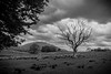 Old Tree (Charlie Little) Tags: tree landscape lakedistrict cumbria bw blackandwhite sony a7 full frame