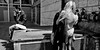 Three's a crowd. (Baz 120) Tags: candid candidstreet candidportrait city candidface contrast street streetphoto streetphotography streetcandid streetportrait rome roma europe women monochrome mono monotone noiretblanc bw blackandwhite urban life primelens portrait people pentax20mm28 italy italia girl grittystreetphotography decisivemoment strangers