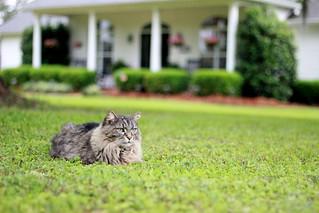Bushy Cat