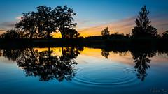 Plum! (mirosławkról) Tags: poland silesia sunset sky sun clouds trees water pond wood lake tree forest