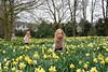 My little darlings (moniquerebanks is away) Tags: daffodils lakedistrict granddaughters askham scenery outdoors field narcissen