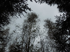 forest (cloversun19) Tags: branches leafs foliage sky russia russian spb tree walking country willage holiday holidays park garden dream dreams positive forest happy view grey legend fairytale fir firtree birch landskape village evening forestimages