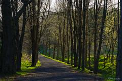 Un sentier au printemps (guysamsonphoto) Tags: guysamson sonyalpha7rmkiii sony90mmf28 spring printemps victo victoriaville boisédesfrèresdusacrécoeur
