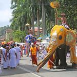 Perahera Elephant (1X7A4780b) thumbnail