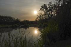 Pond Light (Deepgreen2009) Tags: pond garden home water reflection sunset hazy sunshine pool cirrus cloud west sky