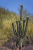 giant saguaro (jimmy_racoon) Tags: canon 400mm f56l 5d mk2 saguaro national park arizona cactus desert landscape canon400mmf56l canon5dmk2 saguaronationalpark